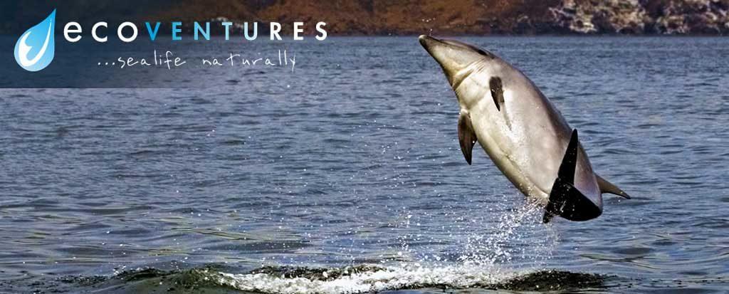 EcoVentures - Bottlenose Dolphins Header